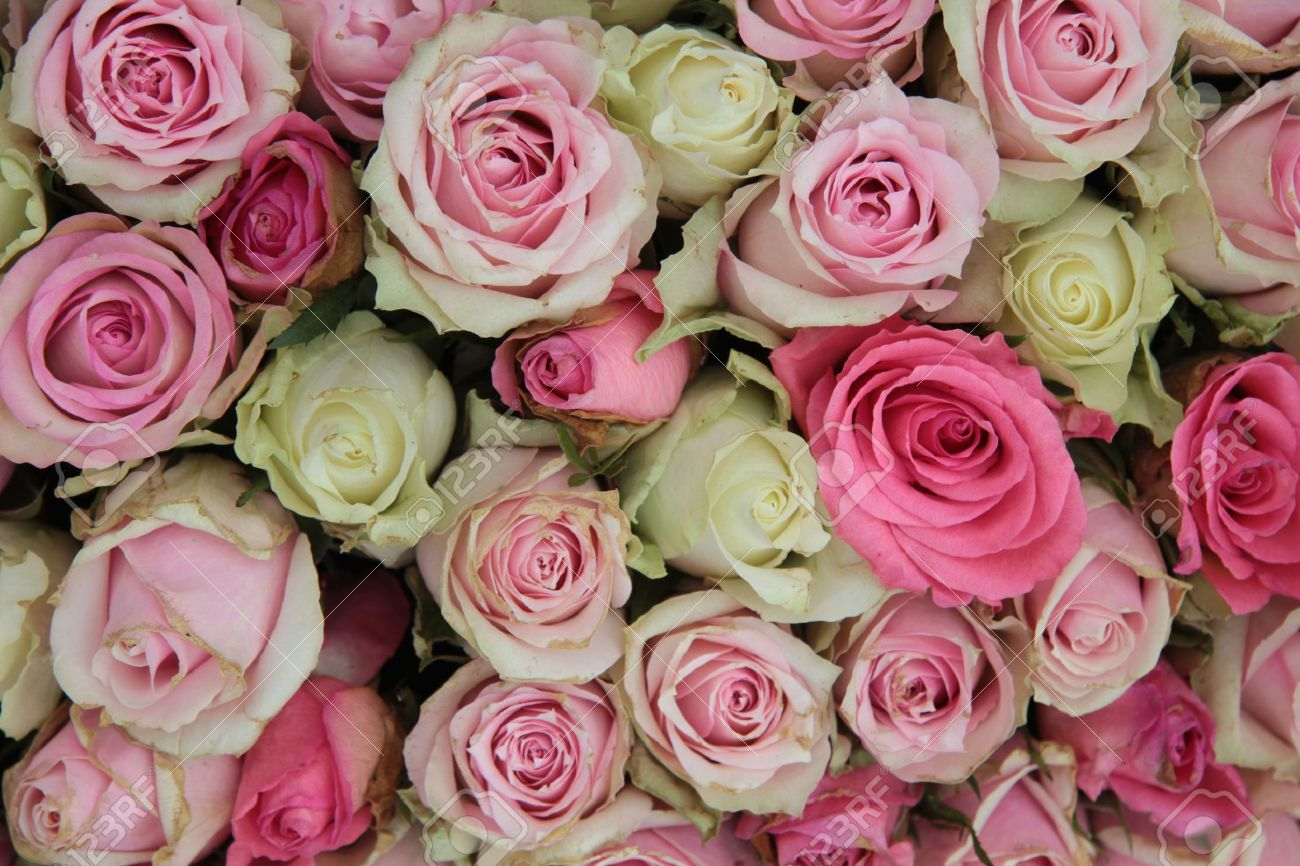 Detail of a wedding centerpiece, different shades of pink roses - 13093658