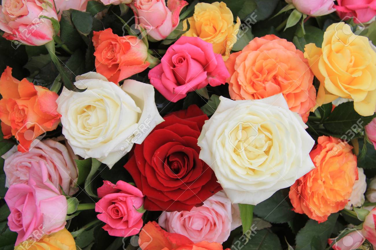 Mixed Rose Bouquet Big Roses In Bright Colors Stock Photo Picture