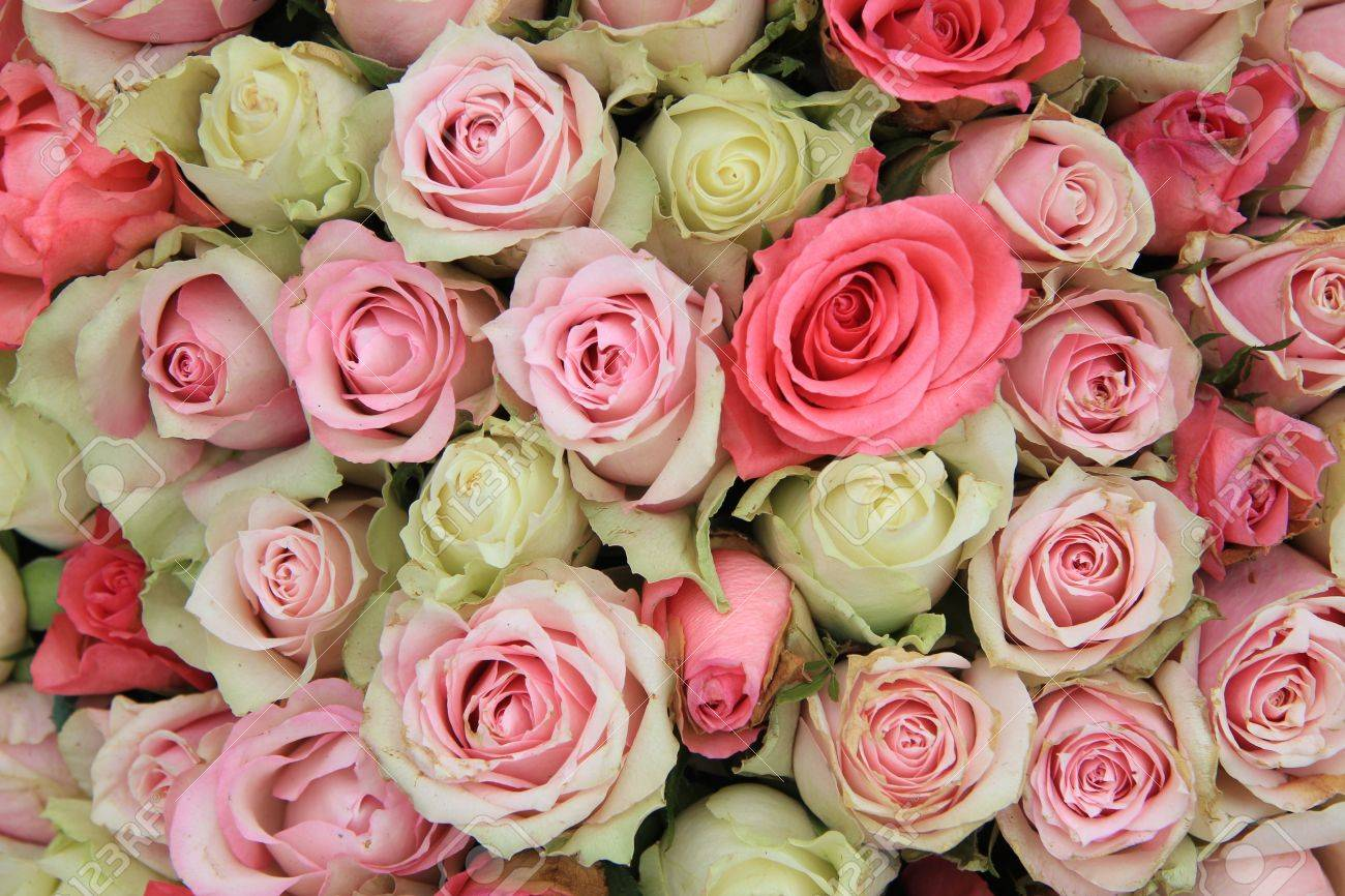 Detail of a wedding centerpiece, different shades of pink roses - 13151949