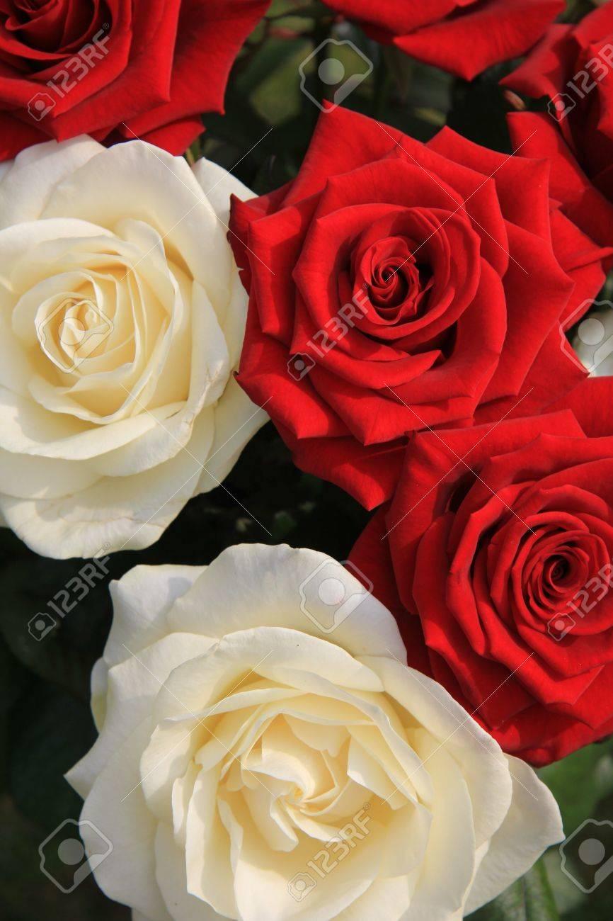 combinacin clsica de grandes rosas blancas y rojas en un ramo de flores foto de archivo - Fotos De Rosas Rojas Grandes