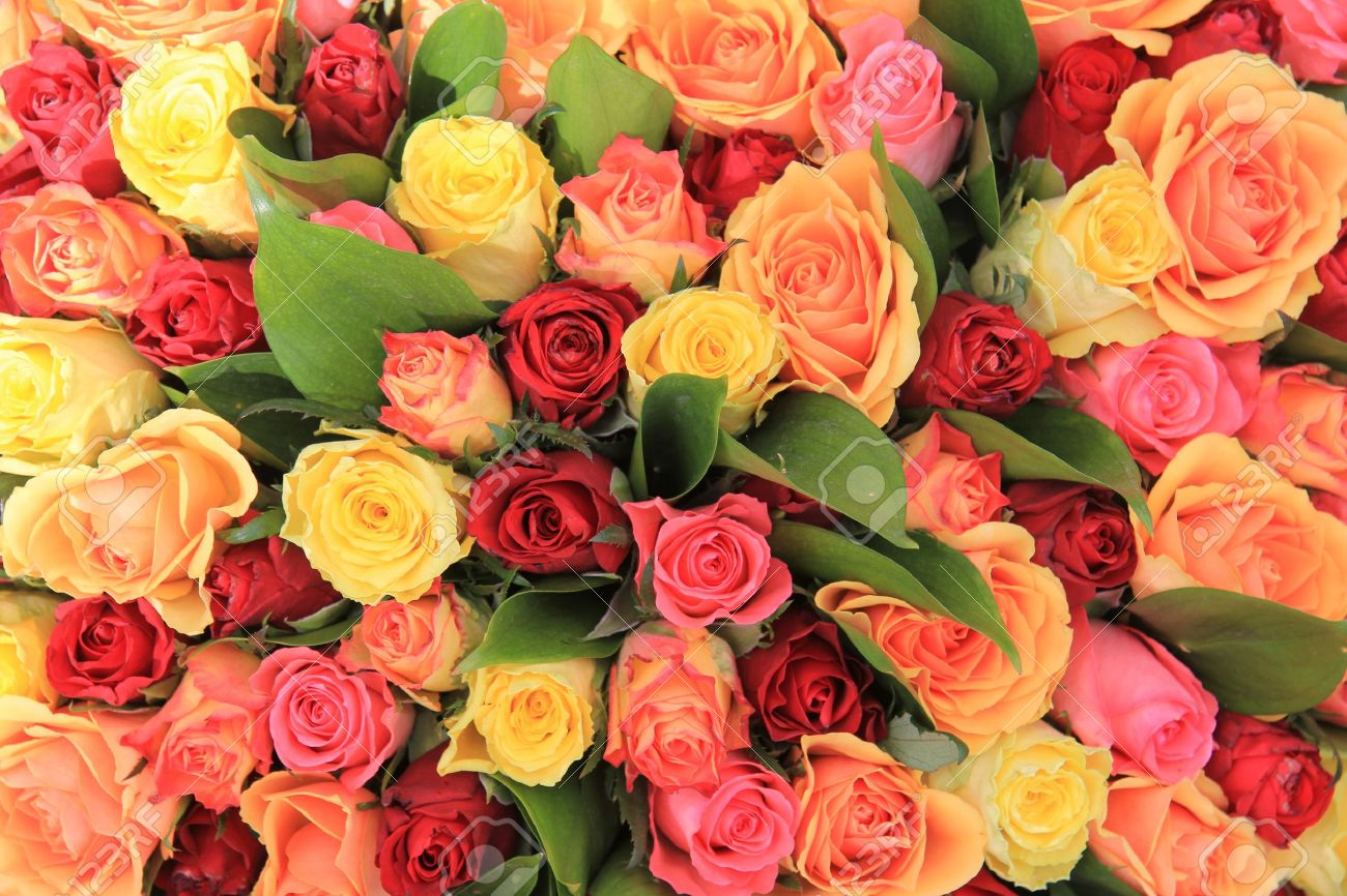 yellow, pink and red roses in a mixed rose bouquet - 13198544