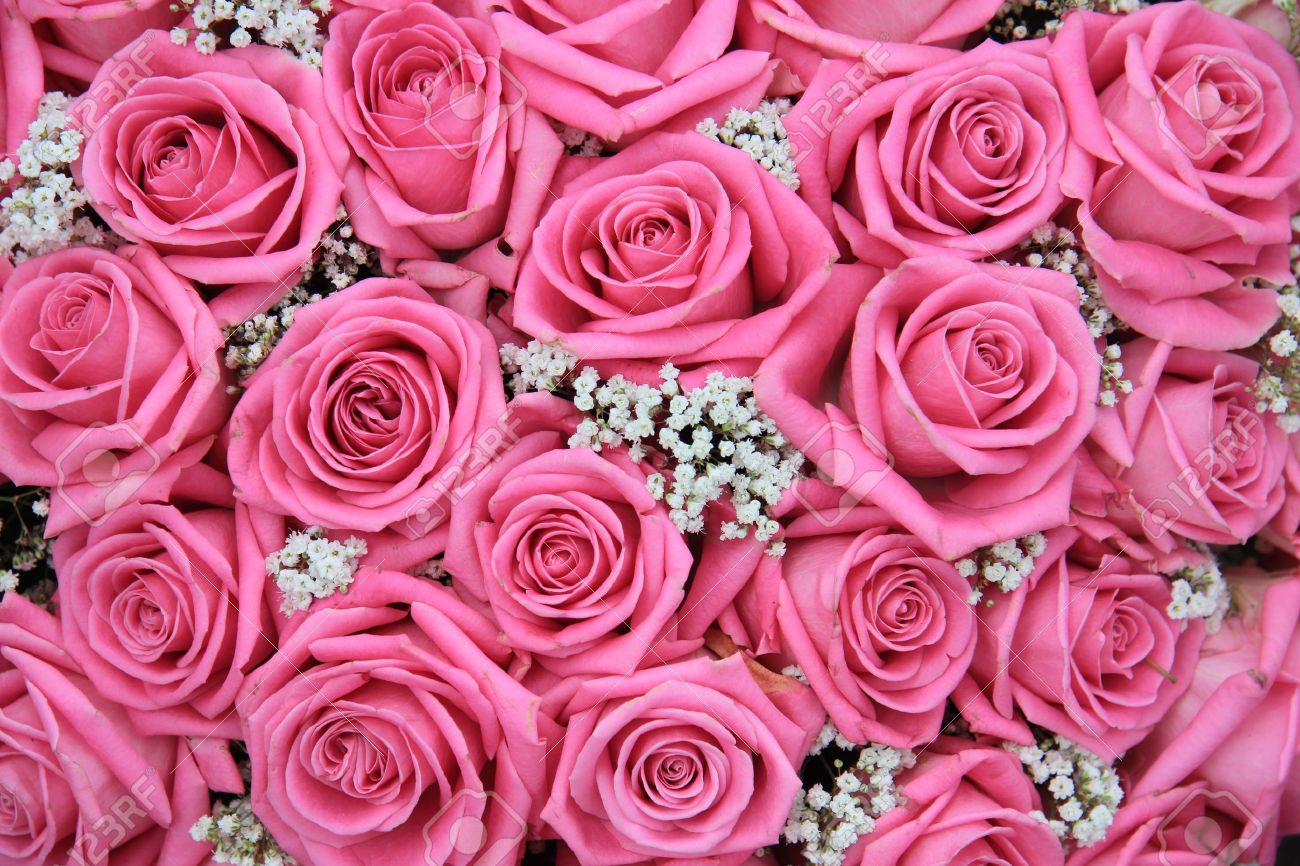 Group Of Pink Roses And White Gypsophila Detail Wedding Flower Arrangement Perfect As