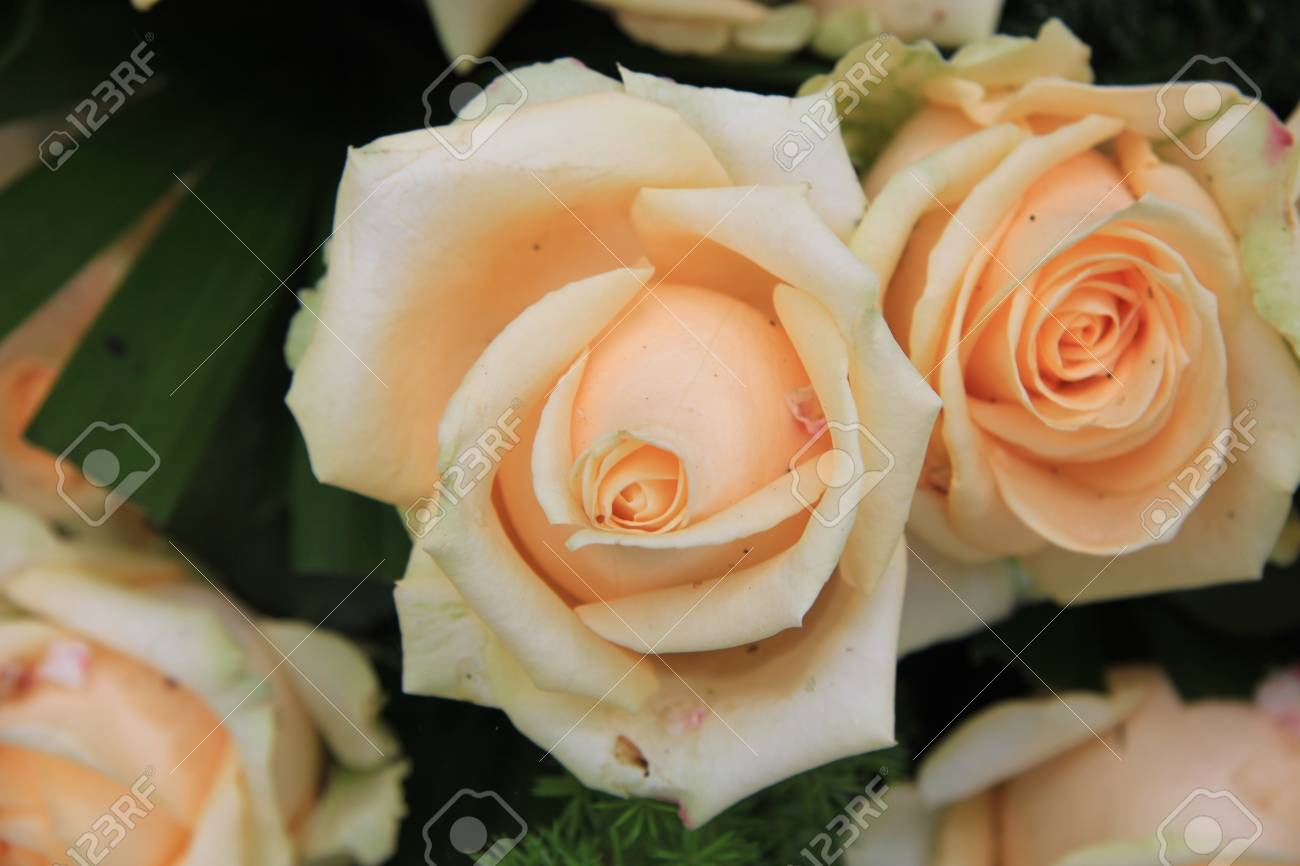 Big Soft Pink Or Orange Roses In A Flower Arrangement Stock Photo