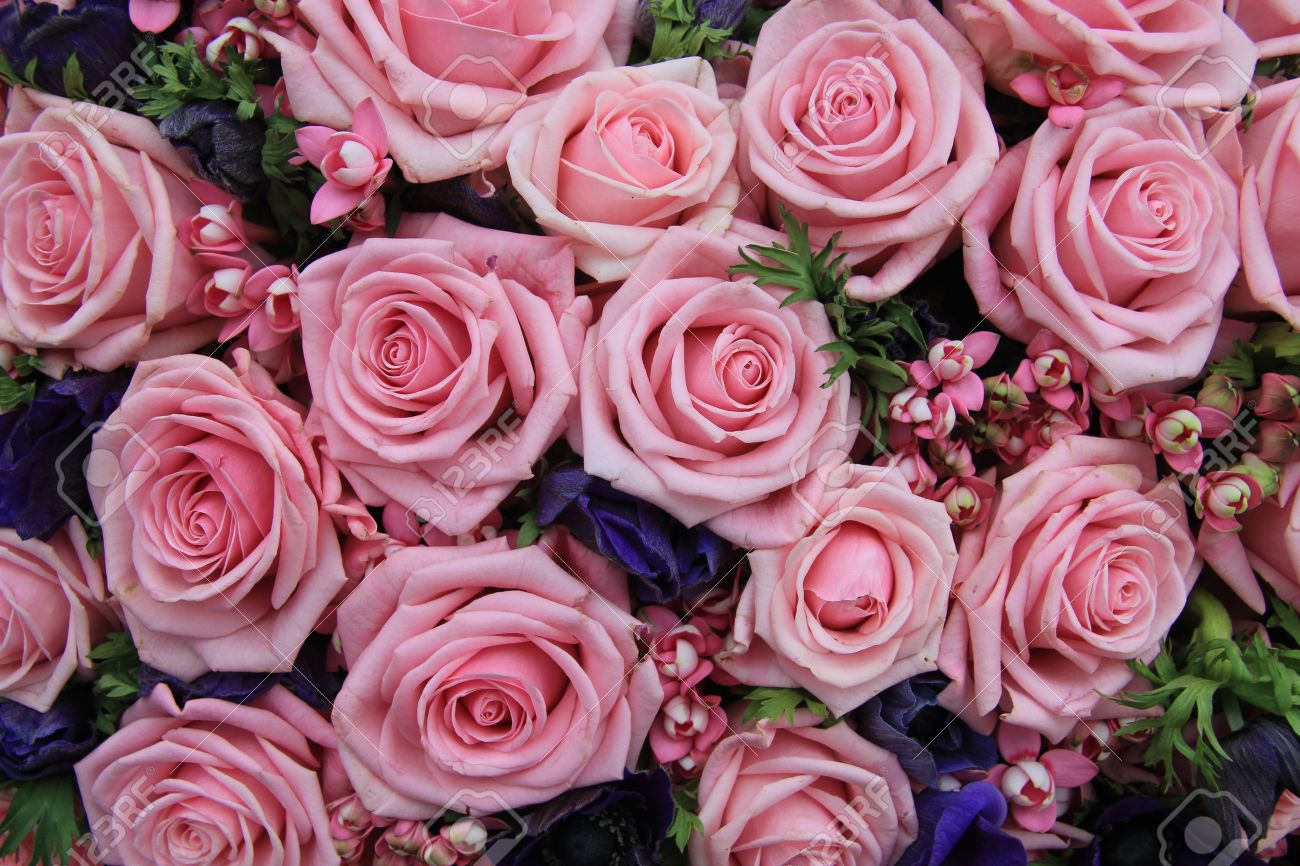 Big group of pink roses, perfect as a background - 14735298