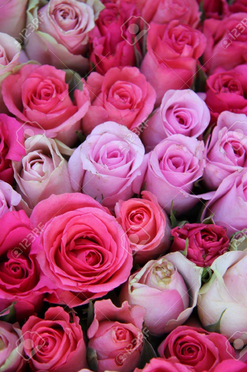 Group of roses in different shades of pink, part of floral wedding decorations - 16000957