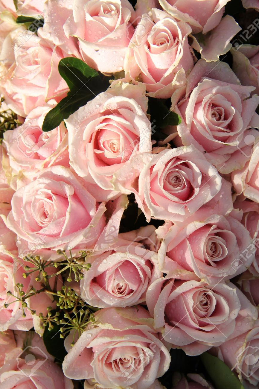 Pale Pink Roses With Dew Drops In A Wedding Centerpiece Stock Photo ...
