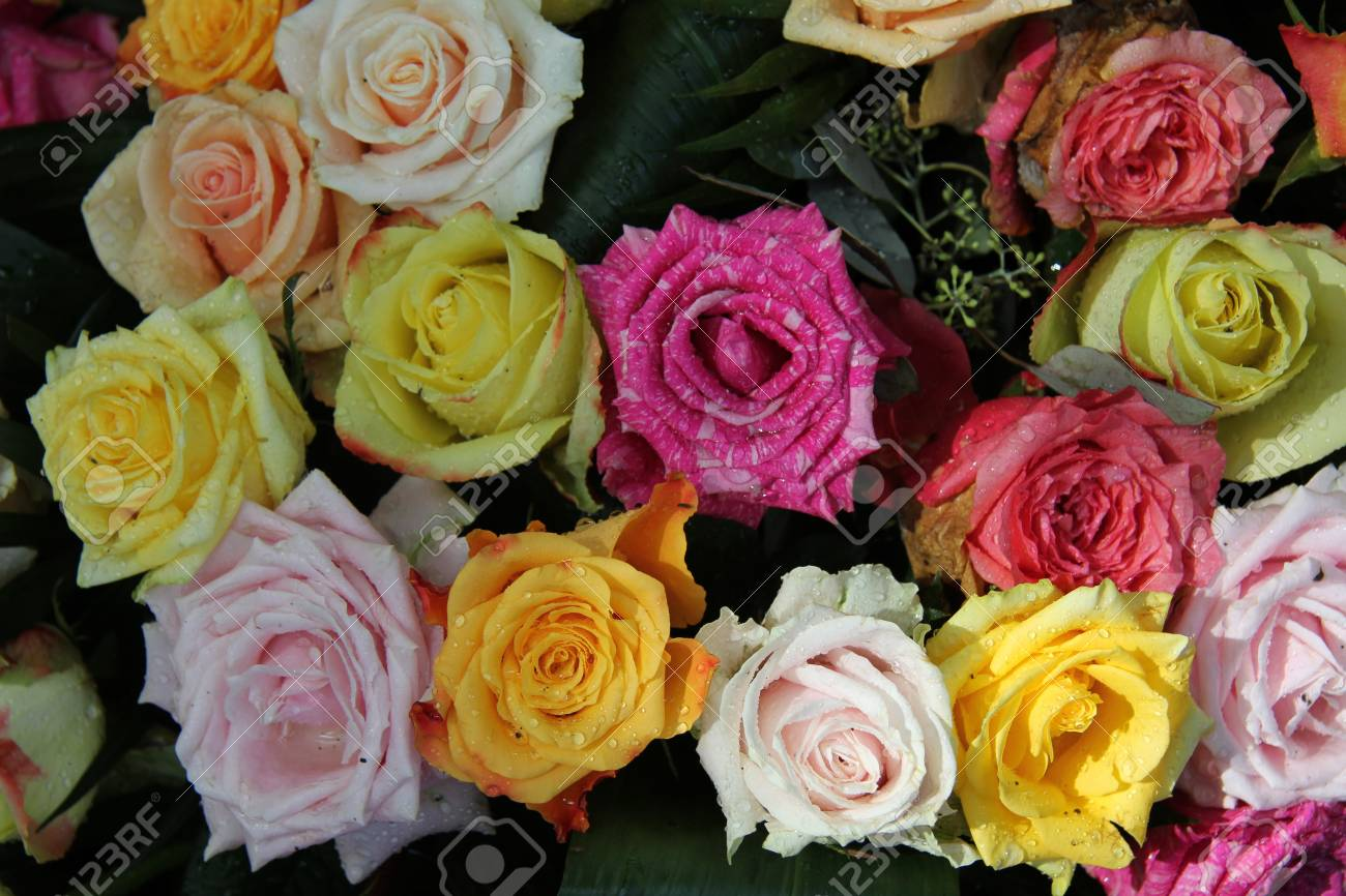 Big Roses With Water Drops In A Multicolored Rose Bouquet Stock