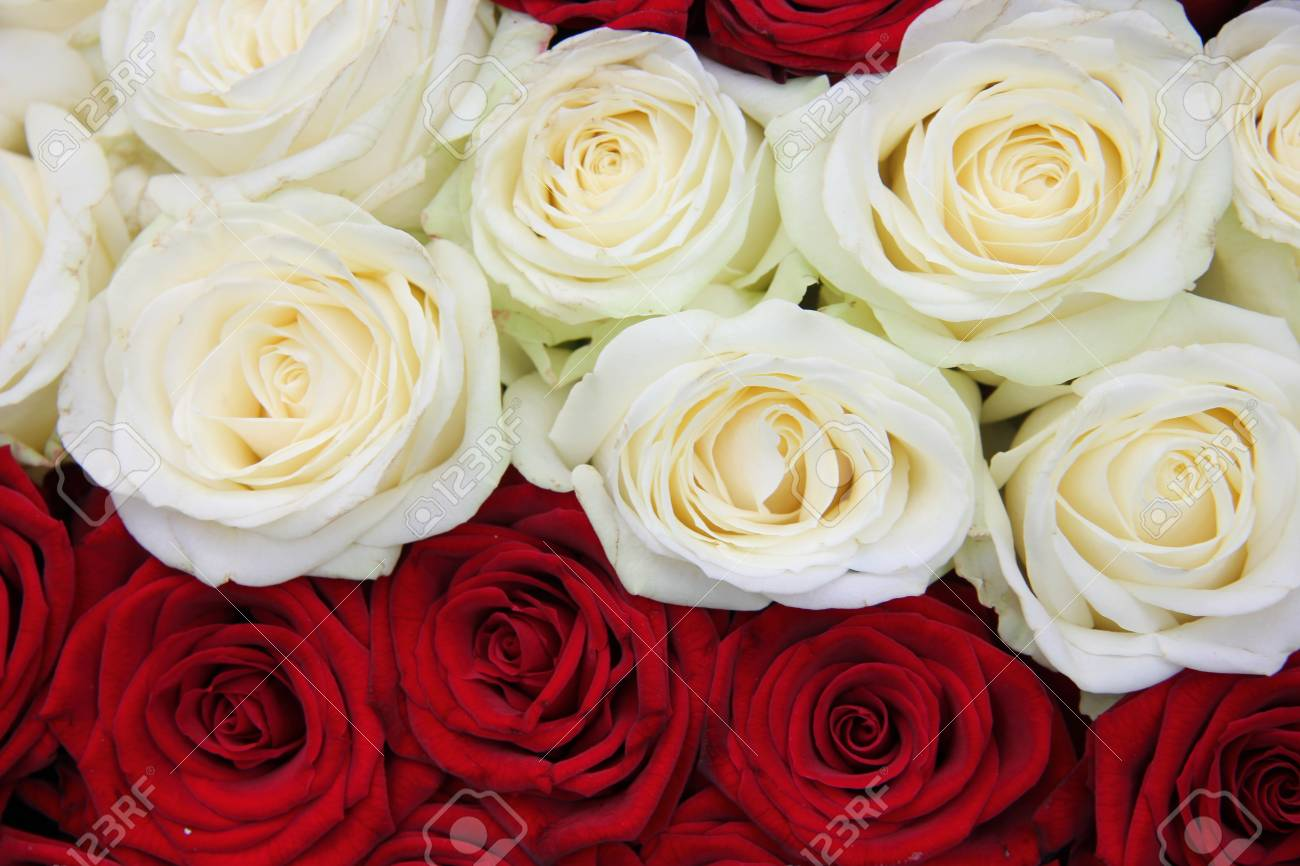 Blanco Y Rojo Rosa Arreglo Floral Para El Día De San Valentín