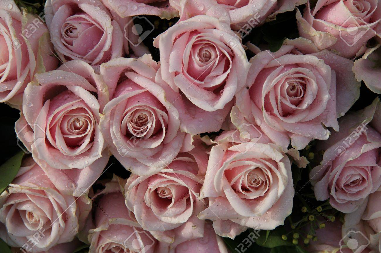 Pale Pink Roses With Dew Drops In A Wedding Centerpiece Stock Photo