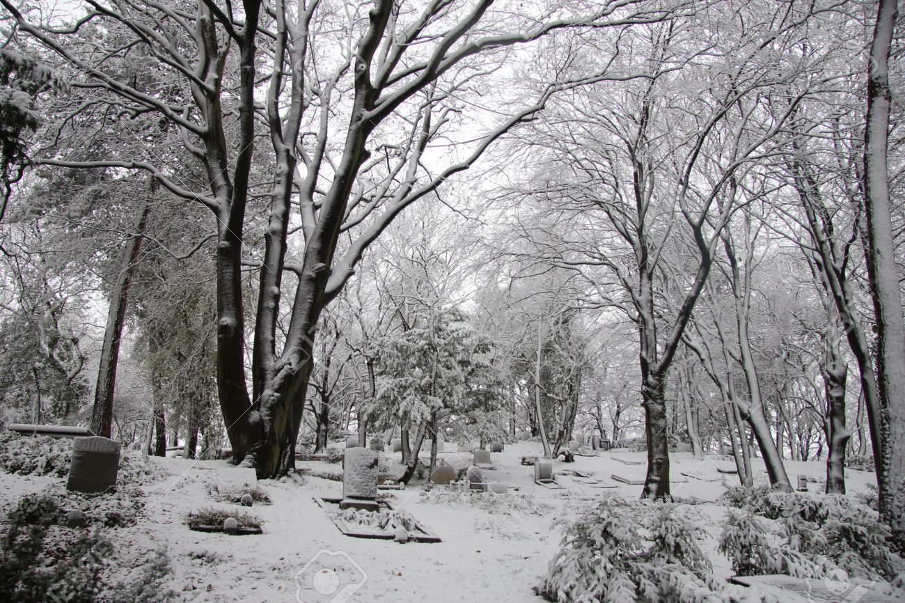 A forest cemetery in the winter, covered in snow