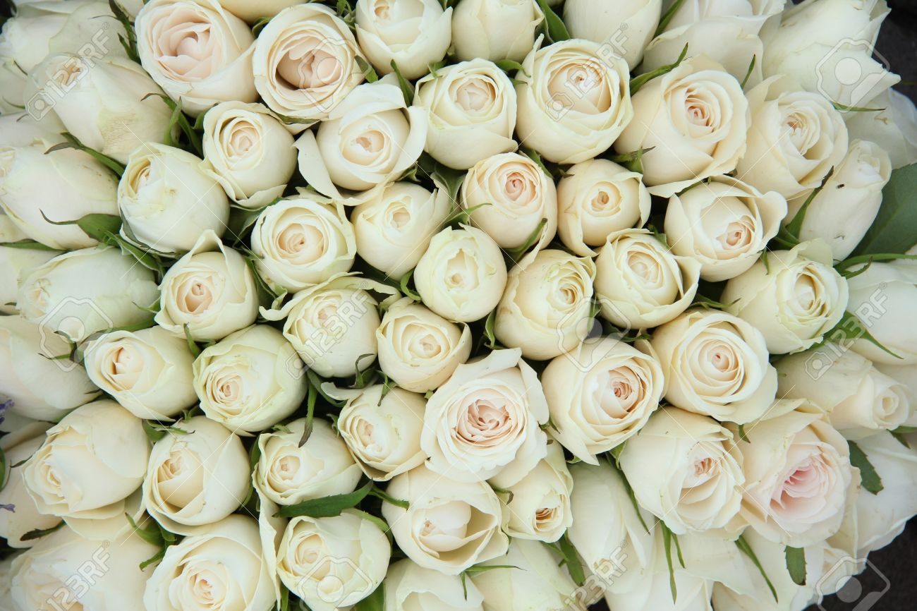 Big Group Of White Roses, Part Of Wedding Decorations Stock Photo ...