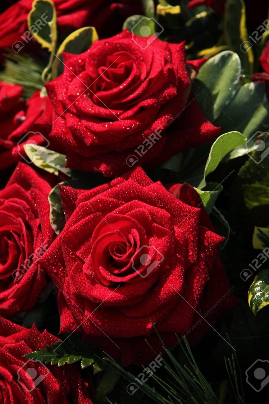 foto de archivo ramo con grandes rosas rojas despus de una ducha de lluvia - Fotos De Rosas Rojas Grandes