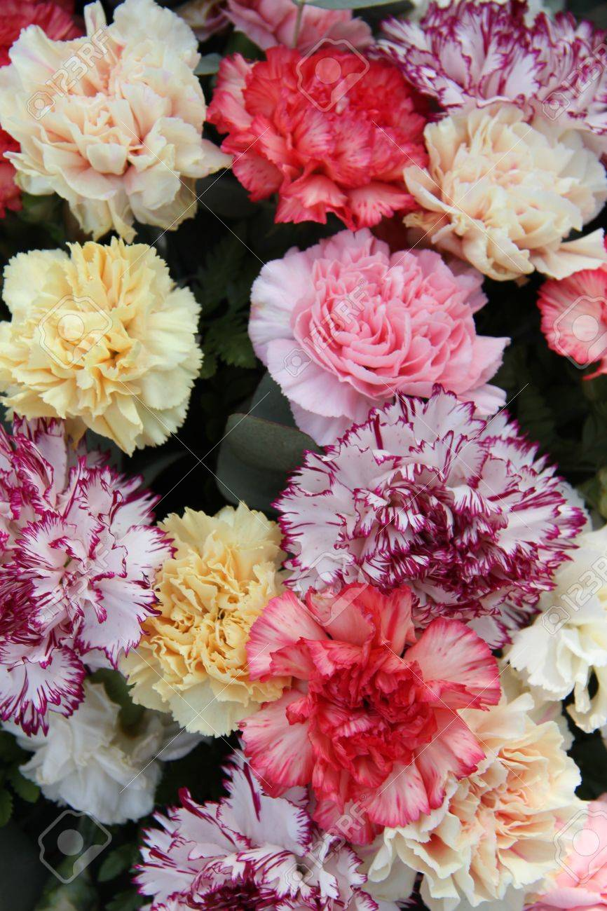 Carnations In Various Pastel Colors For A Wedding Stock Photo ...