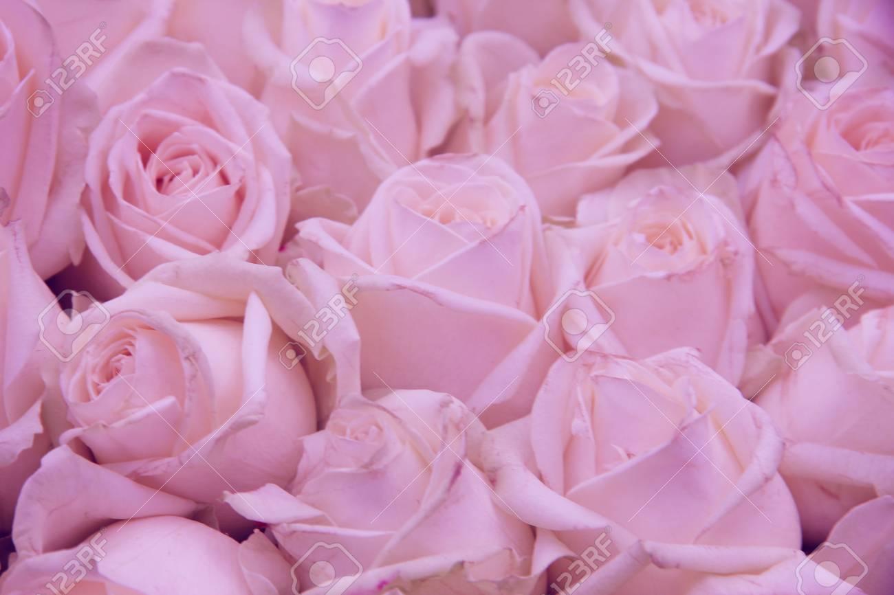 Roses Rose Pale Dans Une Piece Maitresse De Mariage Banque D Images
