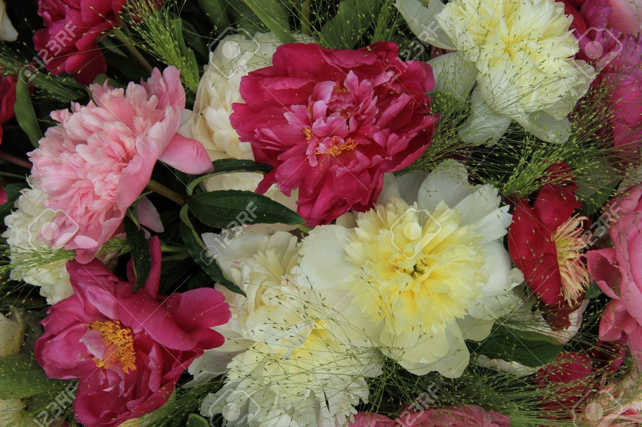 Peonie rosa di nozze