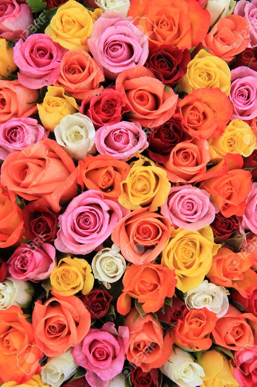 Melange Orange Et Rose roses de mariage multic?ur: un mélange d'orange, rouge, rose et blanc