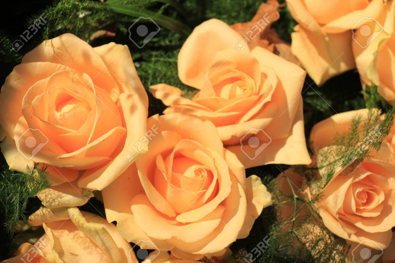 Pink Roses In An All Pink Wedding Arrangement Stock Photo Picture