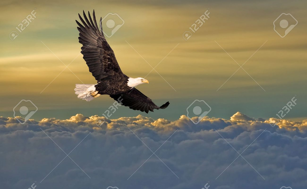 Bald Eagle Flying Above The Clouds Stock Photo Picture And Royalty