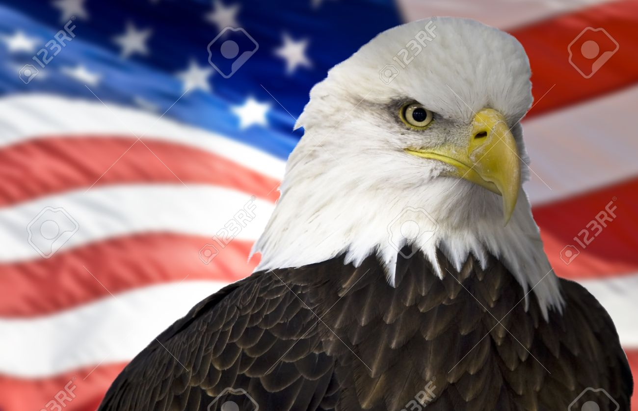 Bald Eagle With American Flag Out Of Focus Stock Photo Picture And