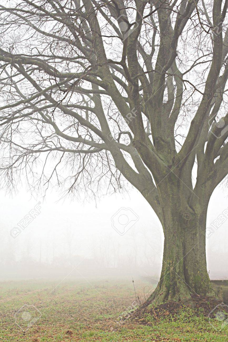 A Close Up Of A Tree With Foggy Wather, Country Landscape ...