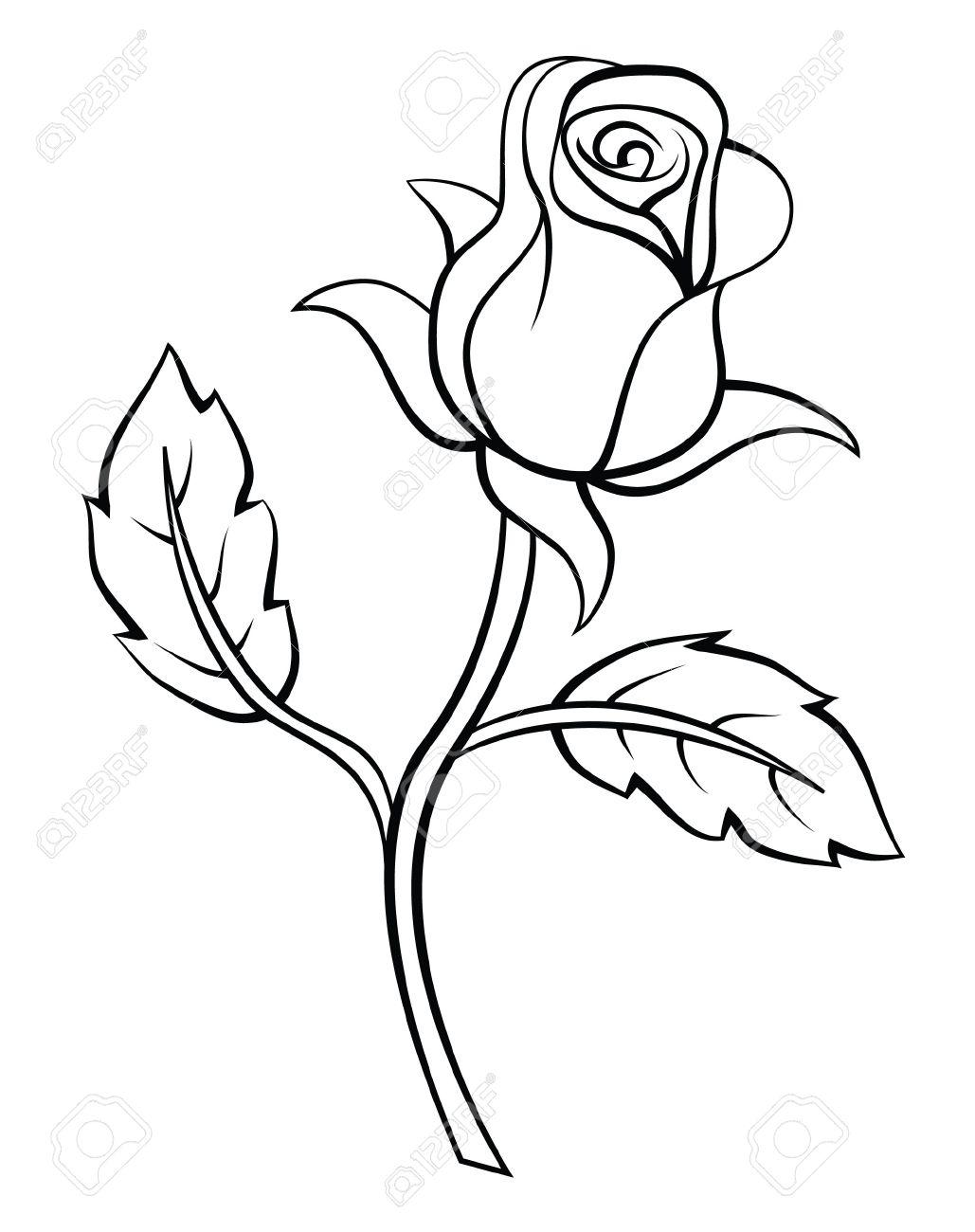 Rose Flower - 35687759