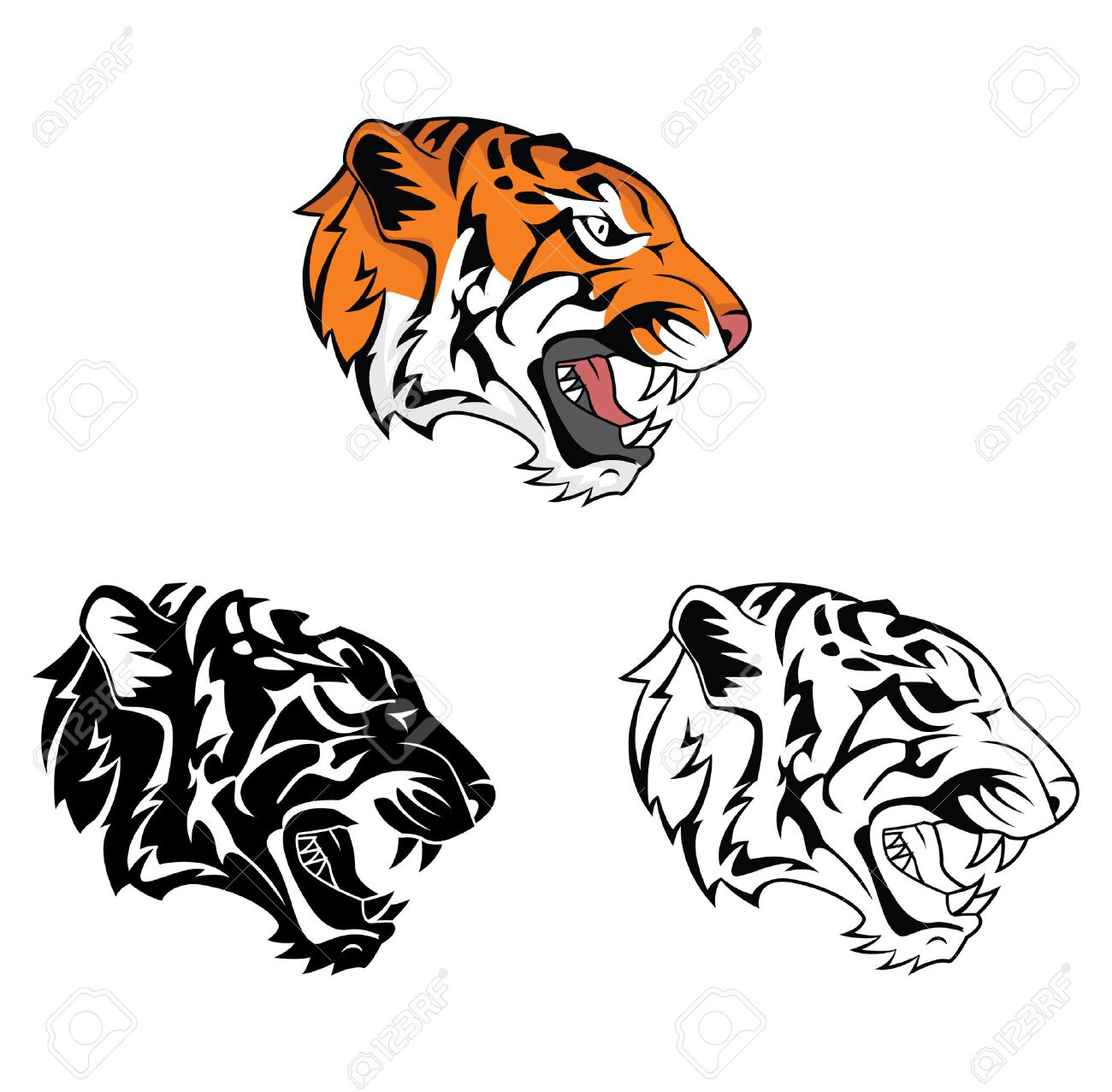 tiger roar stock photos royalty free tiger roar images and pictures