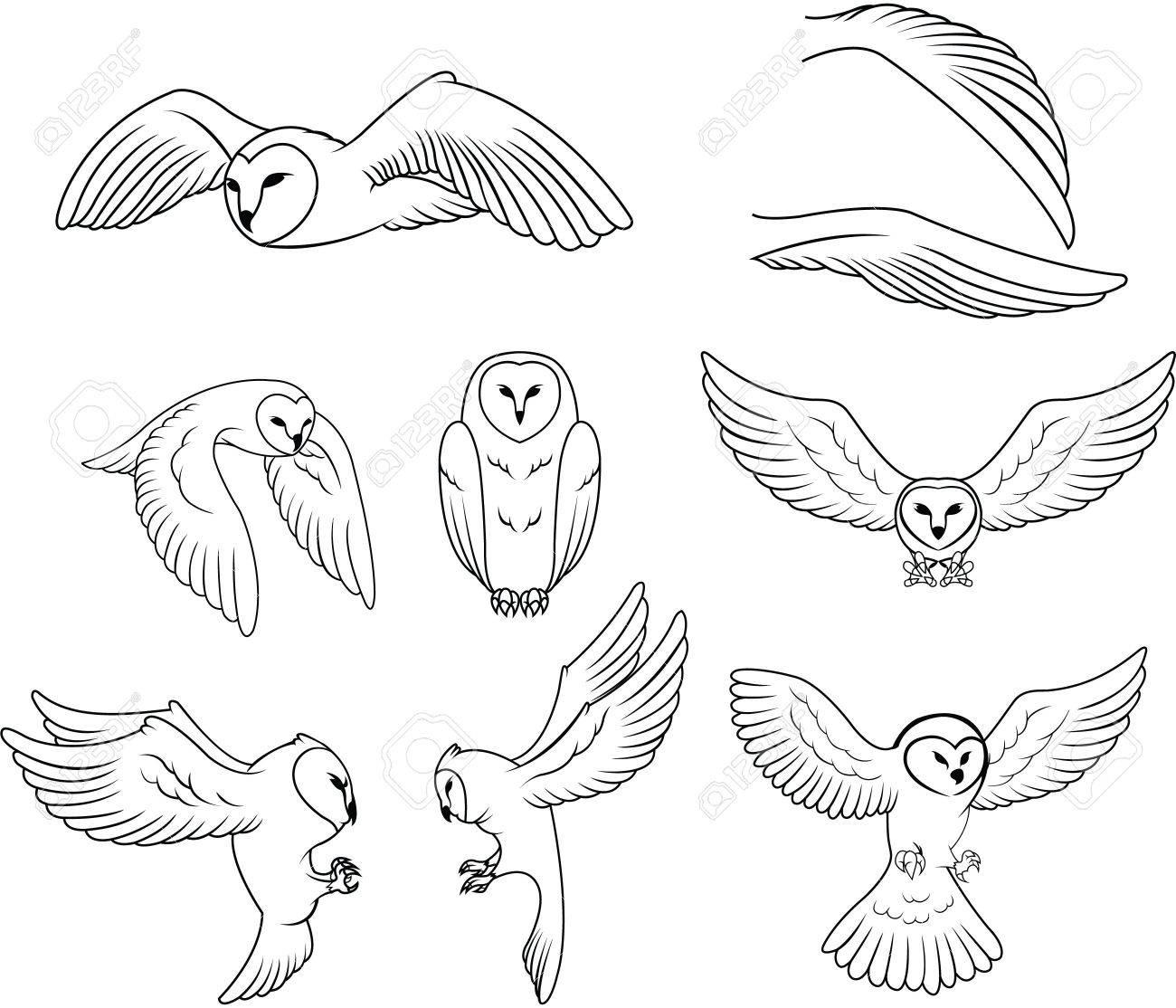 Owl - 46370464