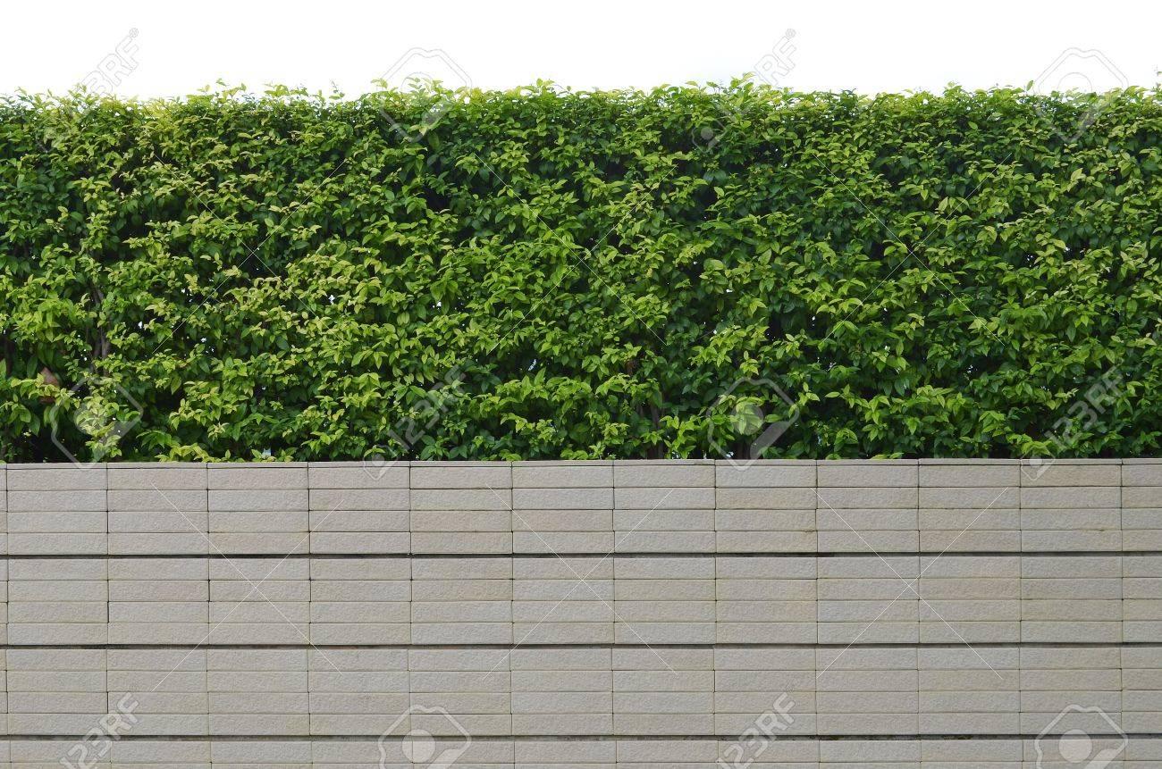 Dekorative Garten Auf Einem Gemauerten Zaun Auf Weißem Hintergrund
