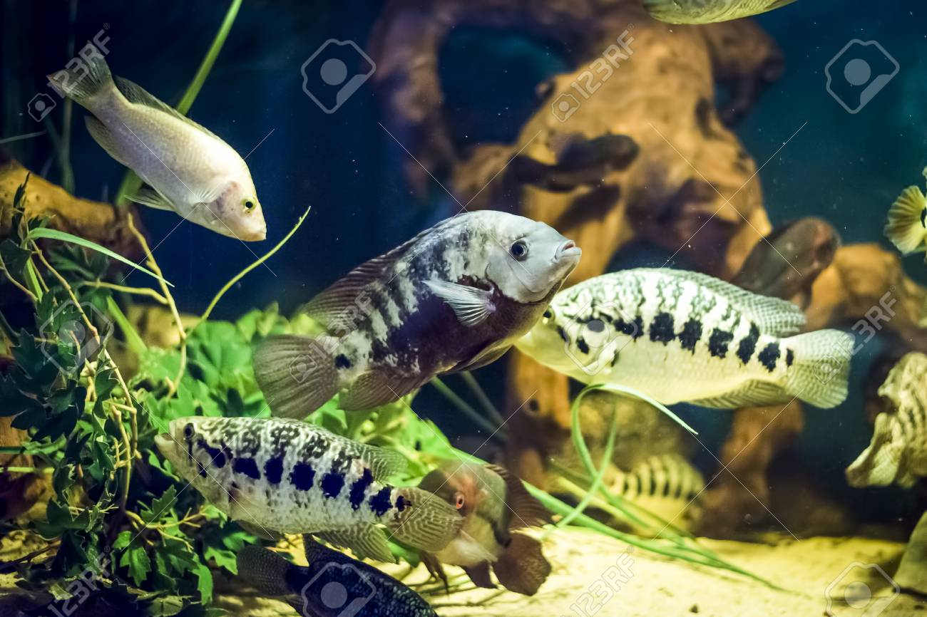 Colorful Fish In Aquarium Stock Photo, Picture And Royalty Free ...