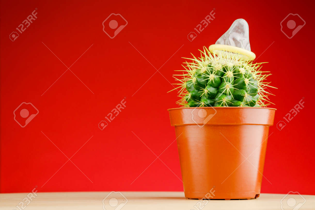 Cactus with a condom on a red background. - 162425071