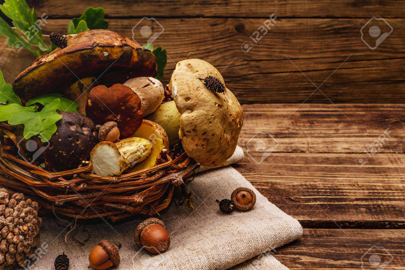 Fresh forest mushrooms. Assorted gourmet porcini and boletus, oak leaves. Old wood plank background, copy space - 149952705