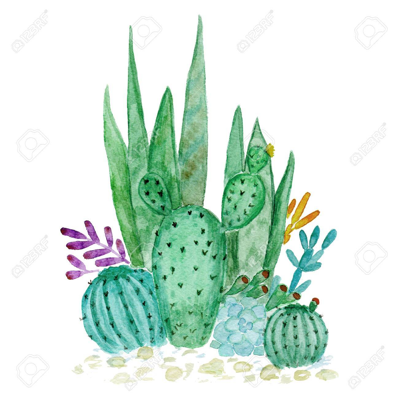 サボテン多肉植物イラスト水彩 Handdraw の写真素材画像素材 Image