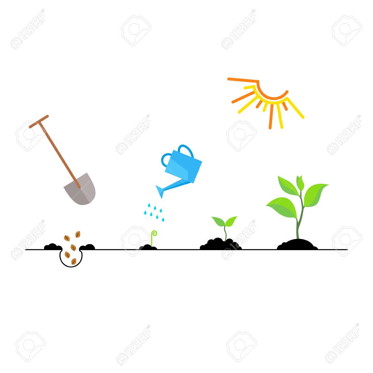 Line sprout and plant growing. Linear nature leaf, grow tree, garden and flower, organic gardening, eco flora. Timeline infographic of planting tree process, business concept flat design. - 53796265