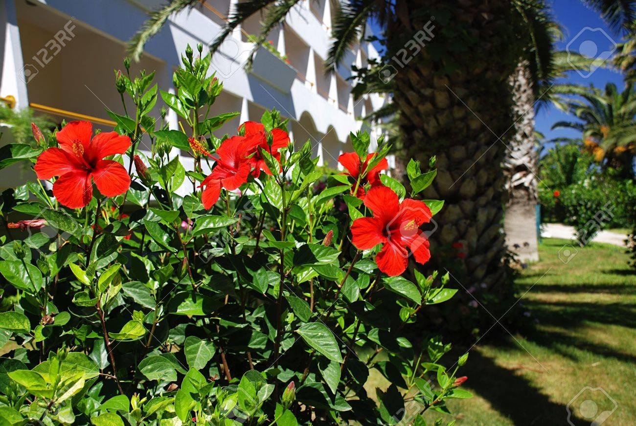 Hibiscus En Face D Une Maison Hotel Dans Un Beau Jardin Tropical