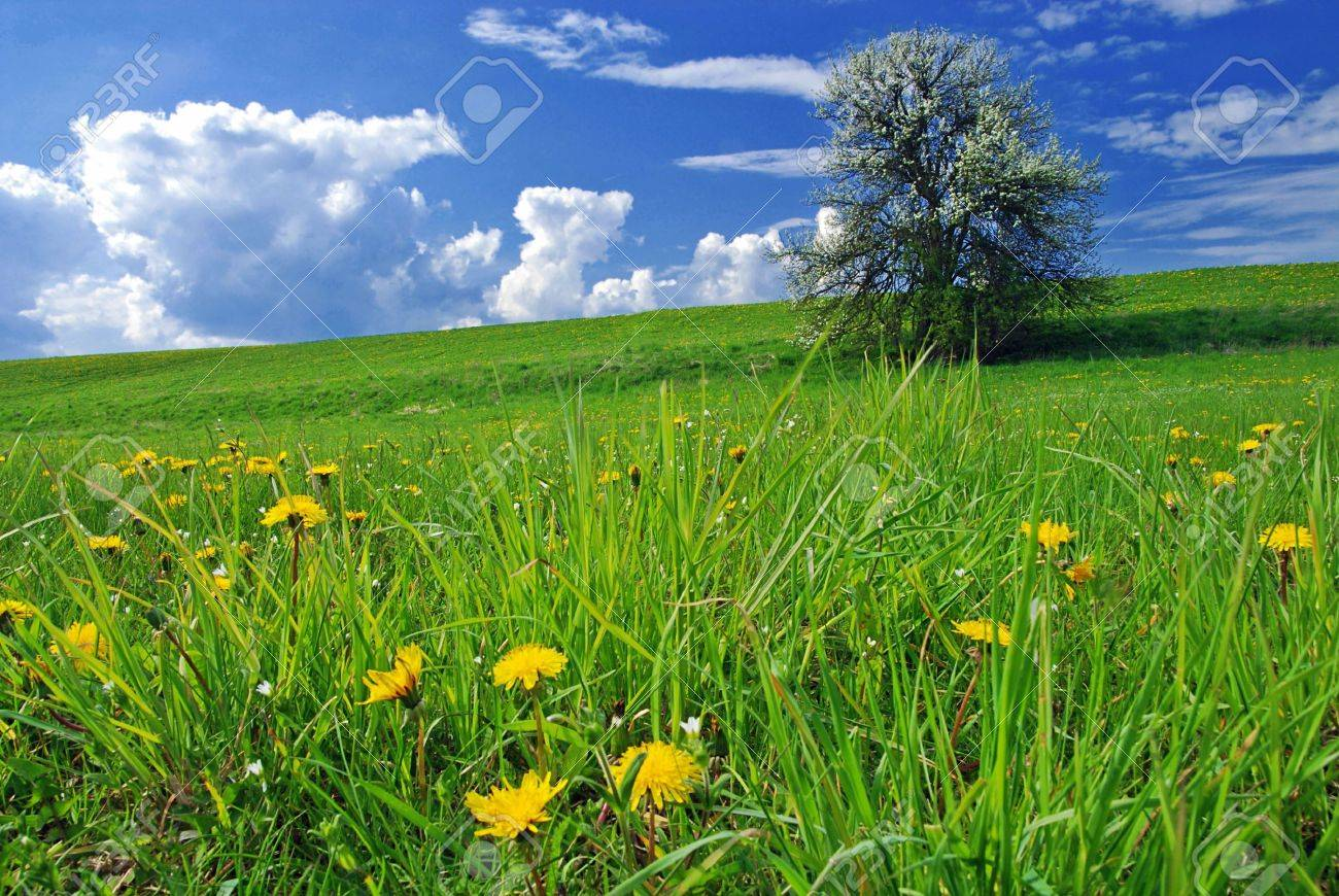 Beautiful spring landscape with tree in bloom and meadow full of dandelions - 3218852