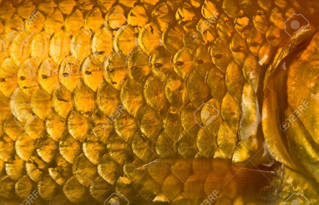 Macro photo of a golden fish scales with flapper Stock Photo - 3331255