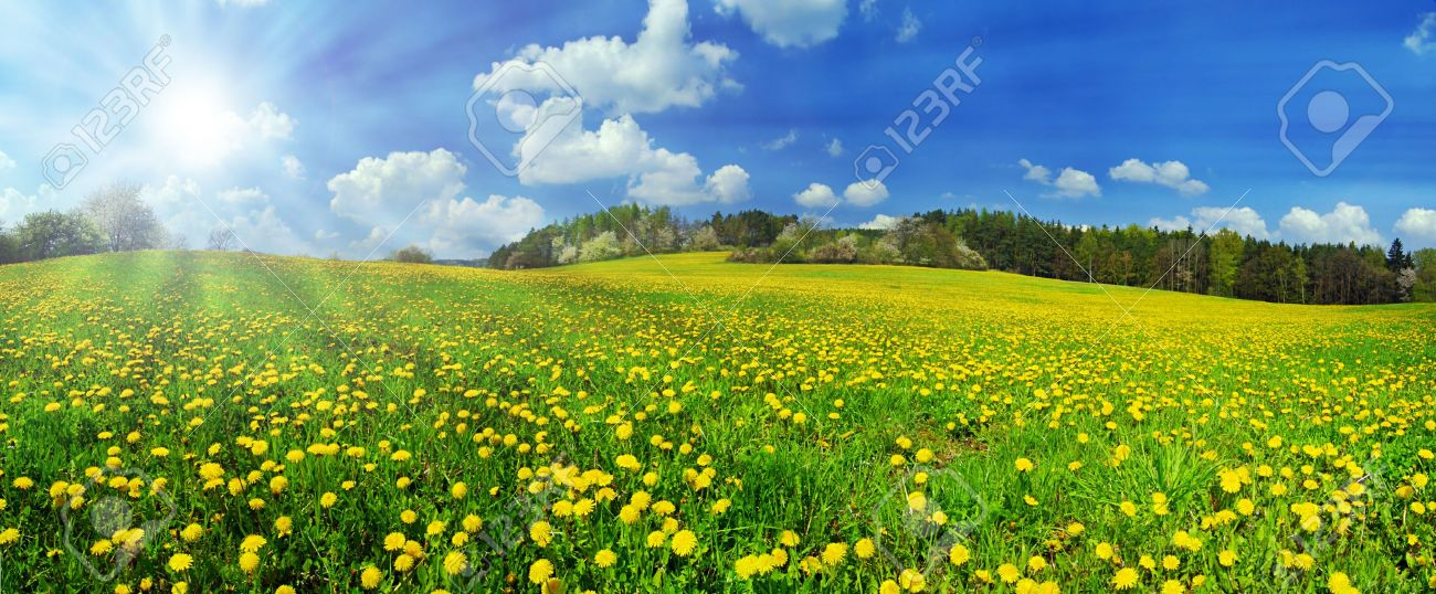 Beautiful spring panoramatic shot with a dandelion meadow and shining sun - 4717774