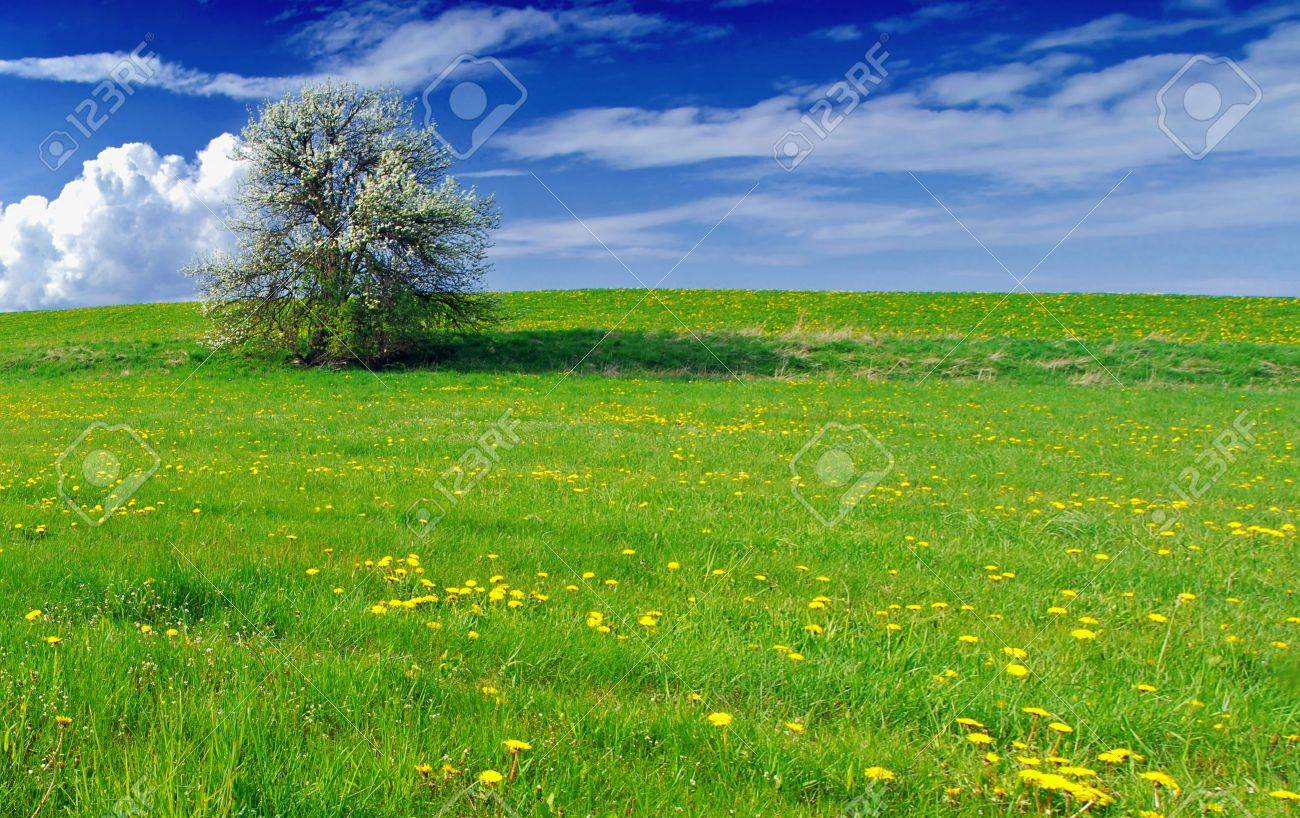 Beautiful spring landscape with tree in bloom and meadow full of dandelions Stock Photo - 9117276