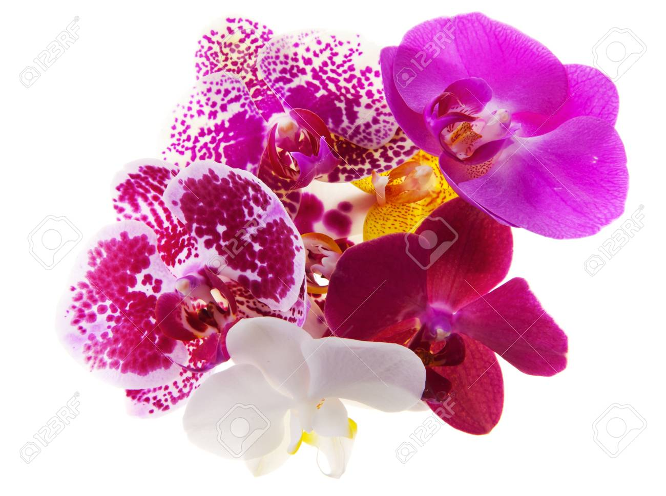 Heap of 7 various phalaenopsis orchid blooms Stock Photo - 11095235