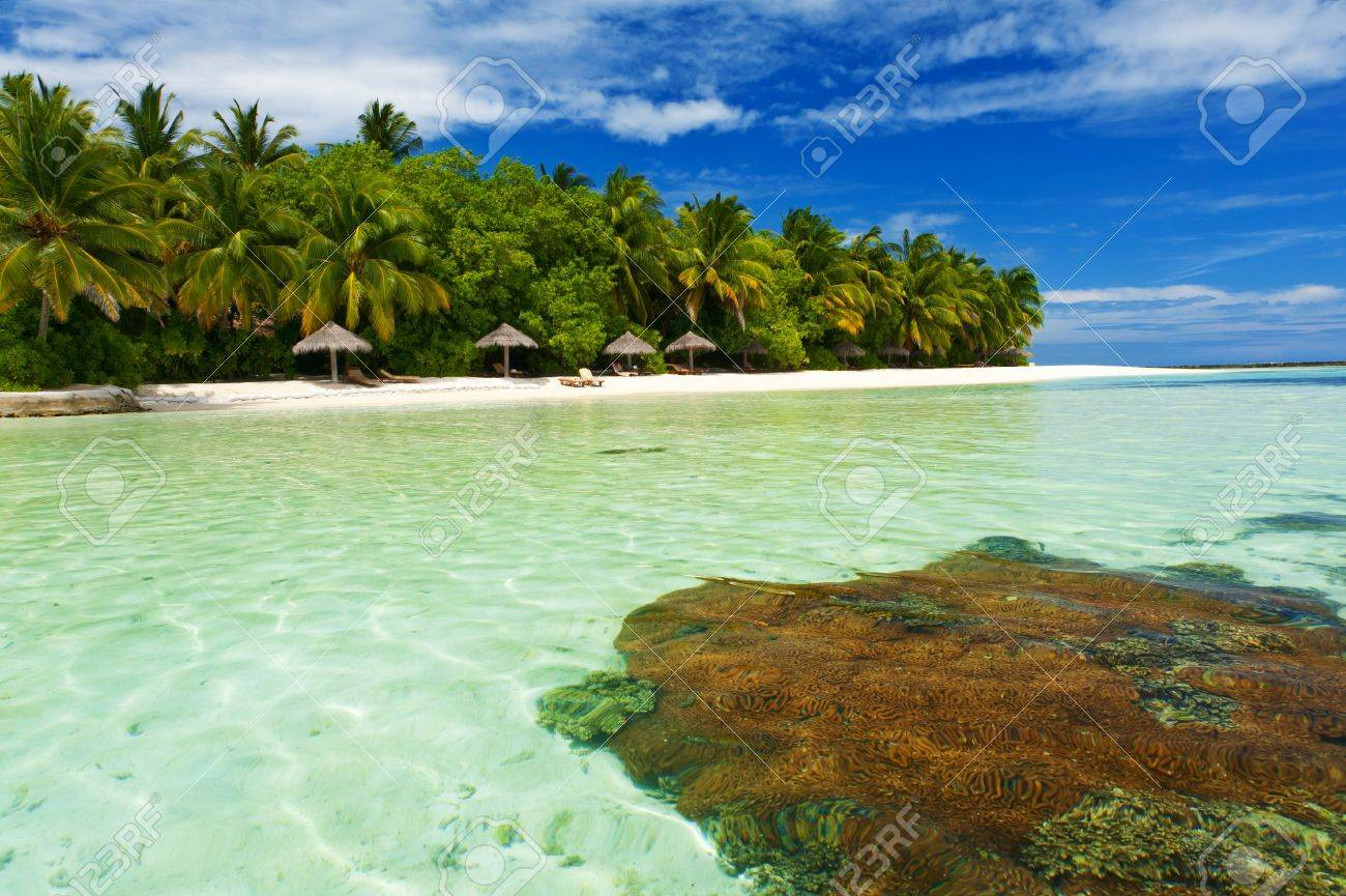 Beautiful tropical paradise in Maldives with coco palms hanging over the white and turquoise sea. Coral reef is visible from underwater. Stock Photo - 11425336