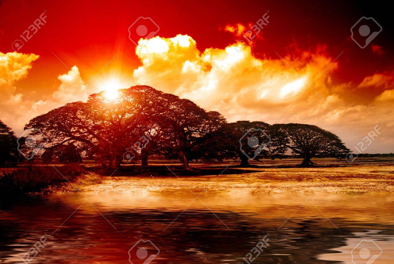 Fantasy sunset over acacia trees reflecting in water in Africa Stock Photo - 12000472