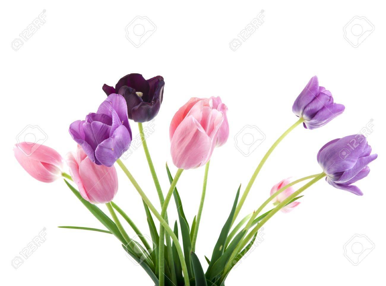 Banque d\u0027images , Bouquet de fleurs de printemps belles , tulipes colorées  sur fond blanc