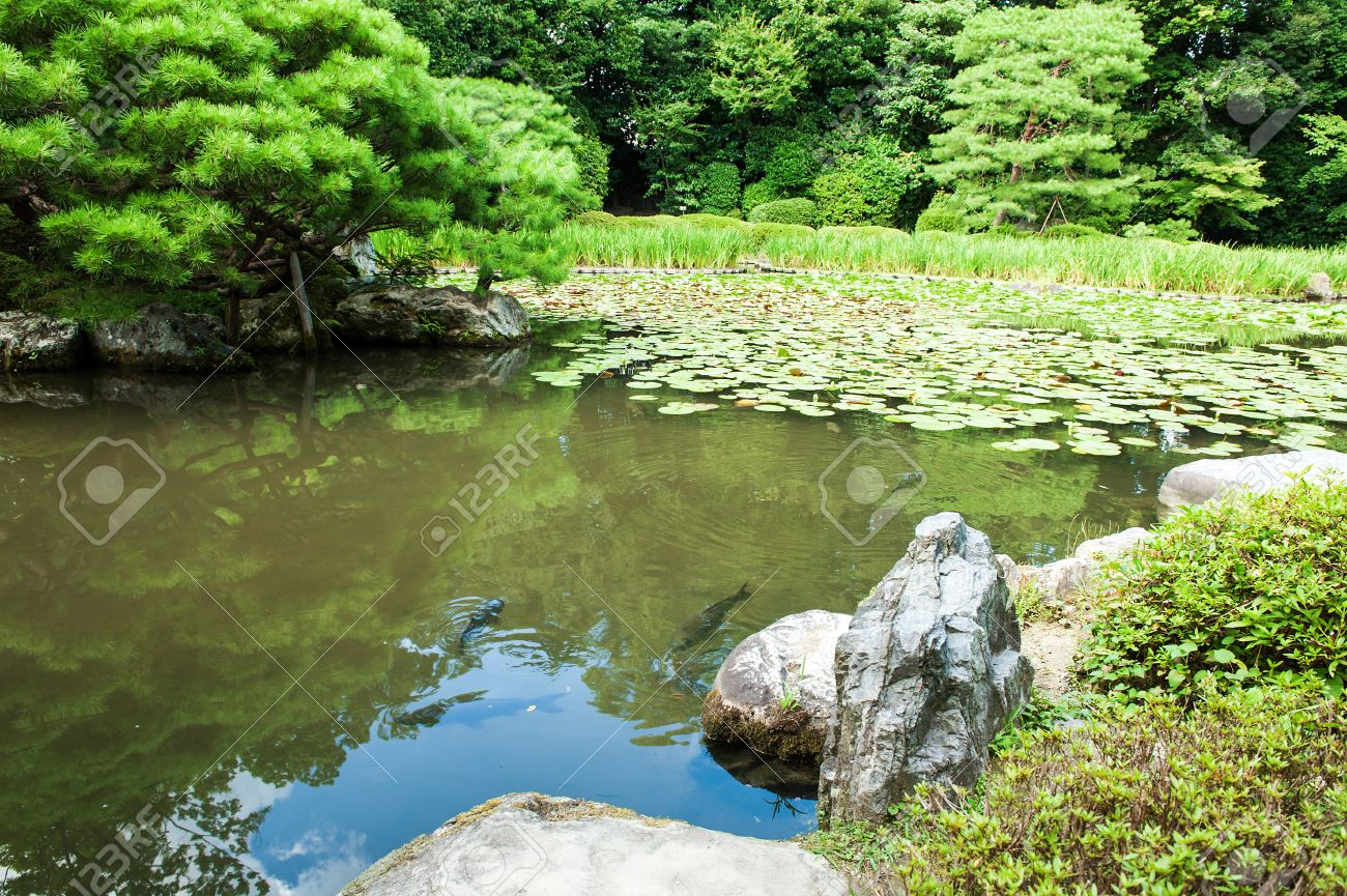 Japanese zen gardens with pond - Zen Garden With Lotus Leaves And A Pond In Kyoto Japan Stock Photo 18025494