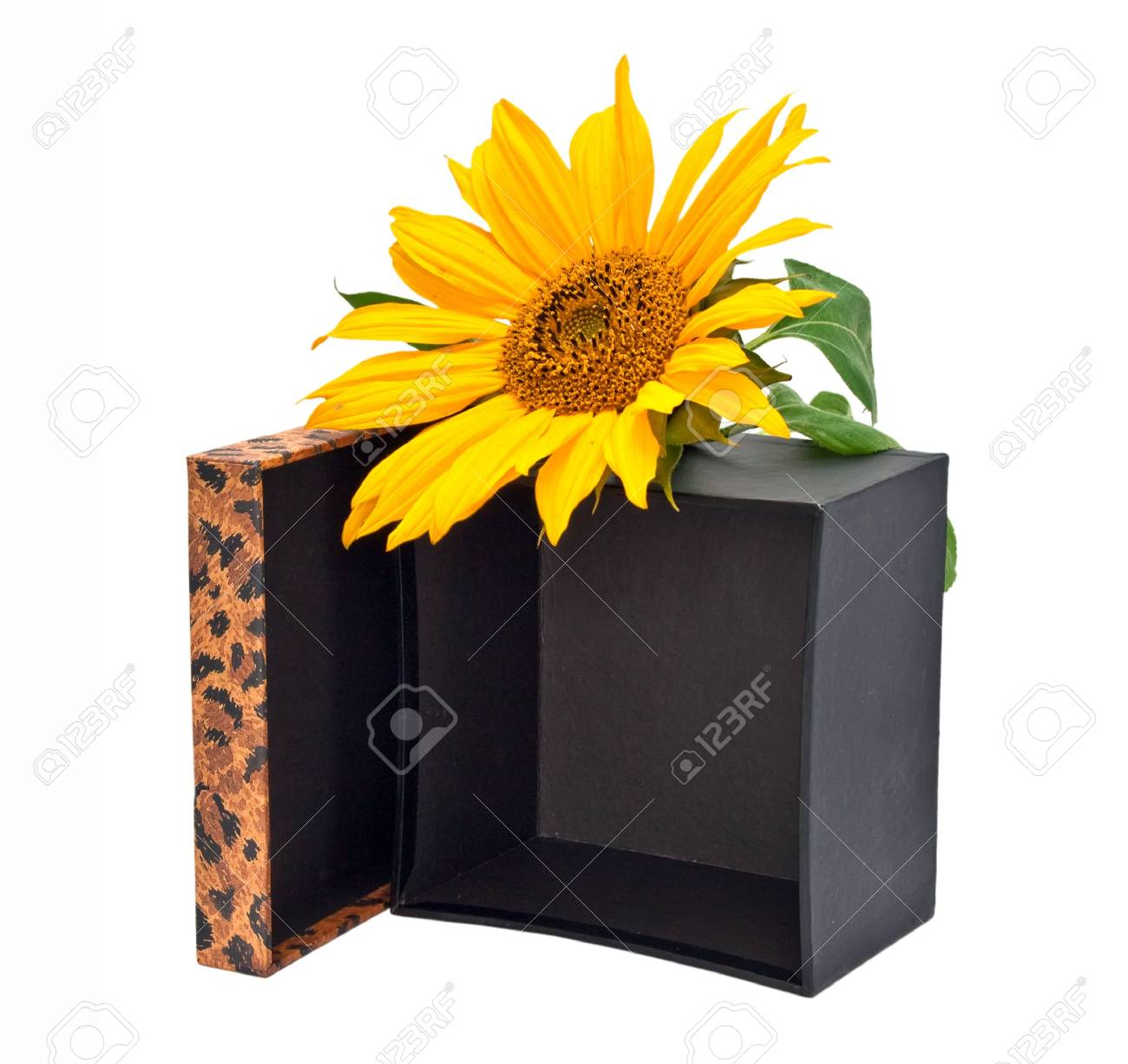 Gift box with flower sunflower isolated on a white background. Stock Photo - 7899902