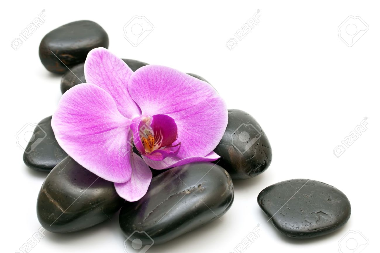 Pink orchid and zen Stones on a white background Stock Photo - 9510779