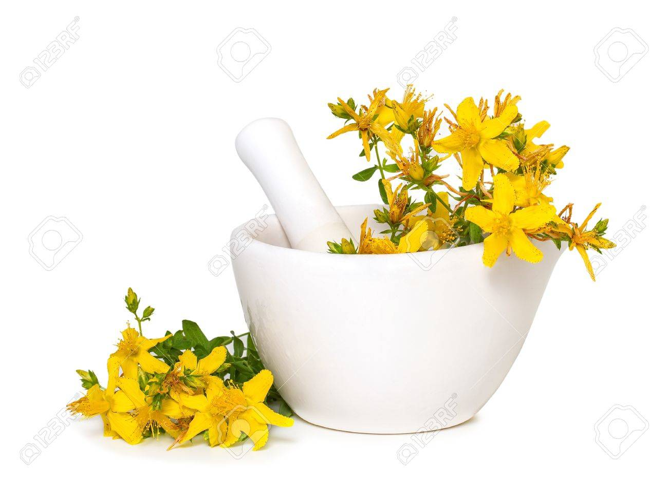 St. John's wort flowers in medical mortar on a white background - 20951757