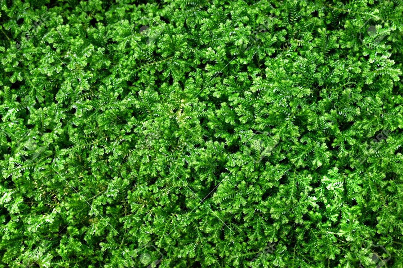 Natural green little plant background. - 123545291
