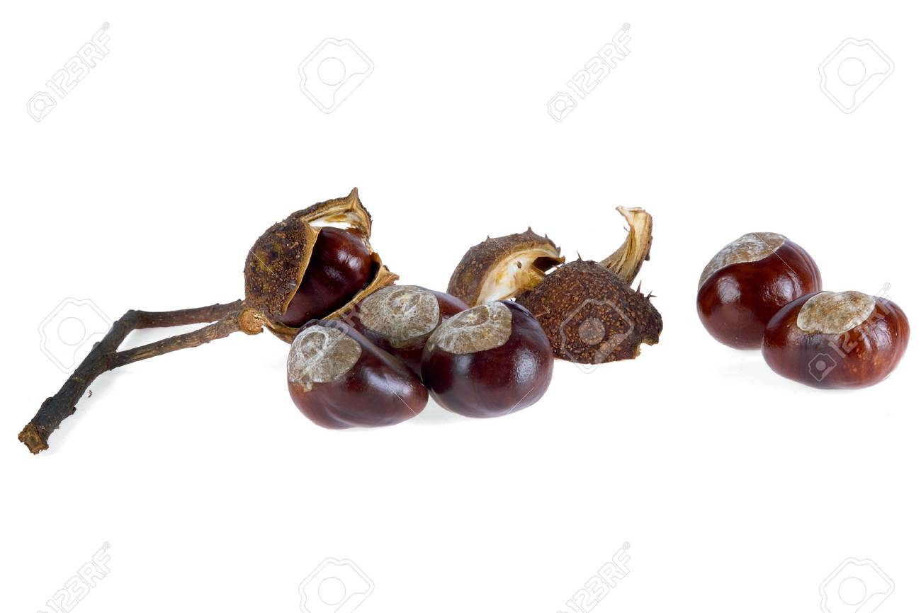 a group of chestnuts, on white Stock Photo - 5768029