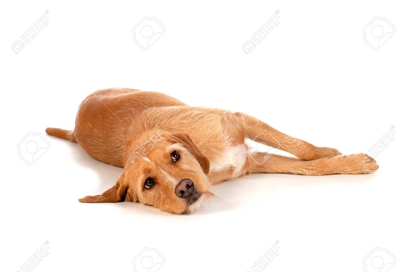 a93fc4e34b2 A Brown Dog