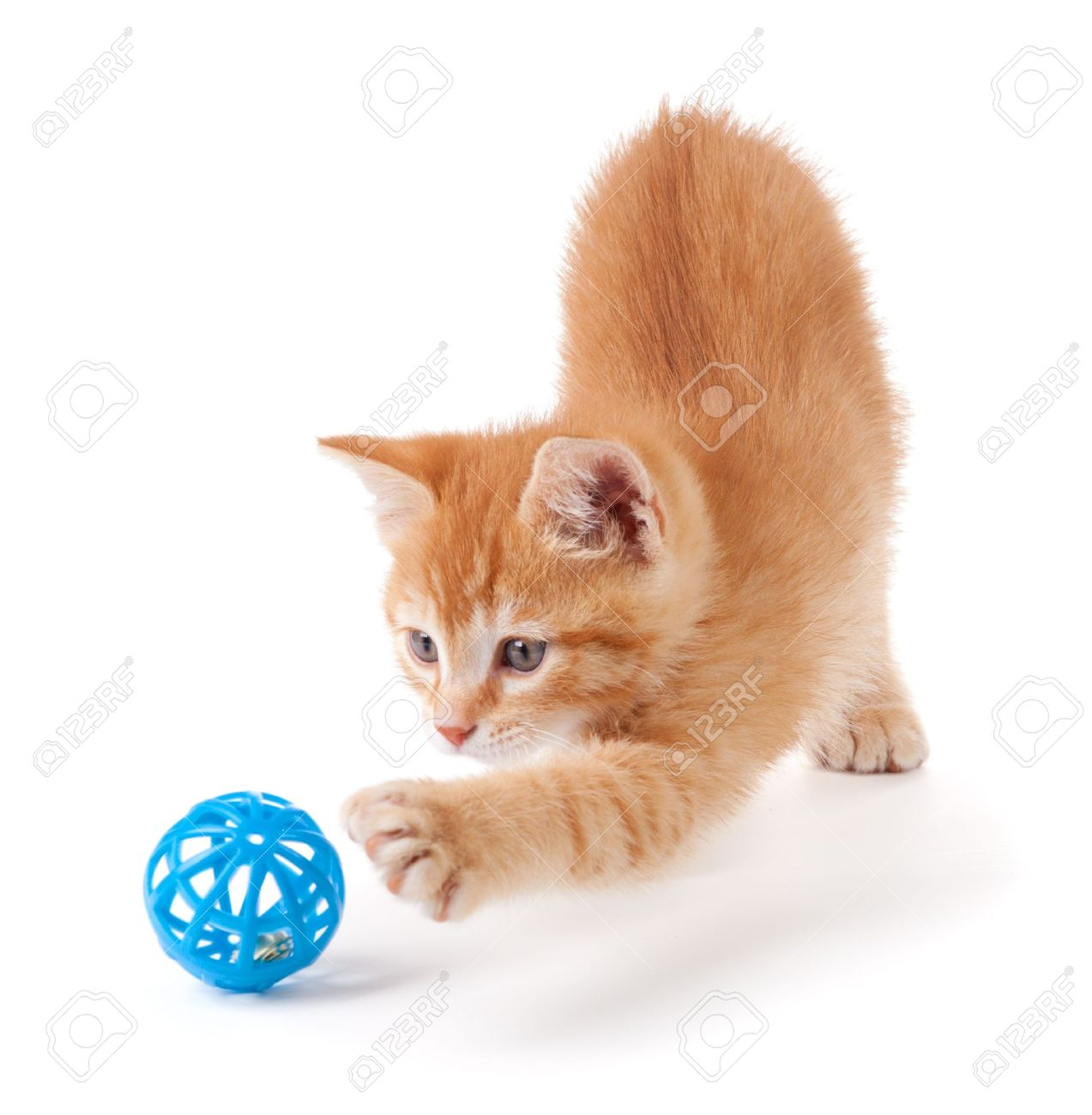 Cute Orange Kitten With Paws Playing With A Toy Stock